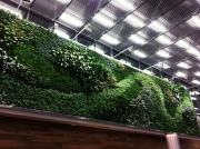Cool plant wall