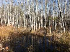 Scape Ore Swamp