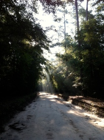 Sunrise on a dirt road in Lee State Park