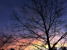 The last sunset of 2012 behind my sycamore