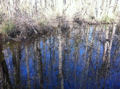 A beautiful sky reflected on the floodplain