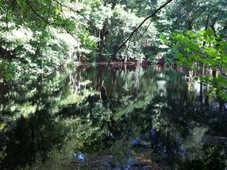 a black water pond at Lee State Park