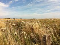 a Norman field near Longues-sur-mer