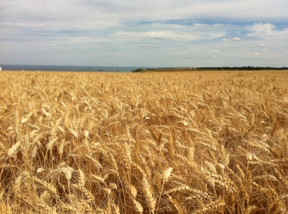 the Channel viewed from a wheat field at Longues-sur-mer